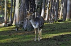nature wildlife park granat haltern 100